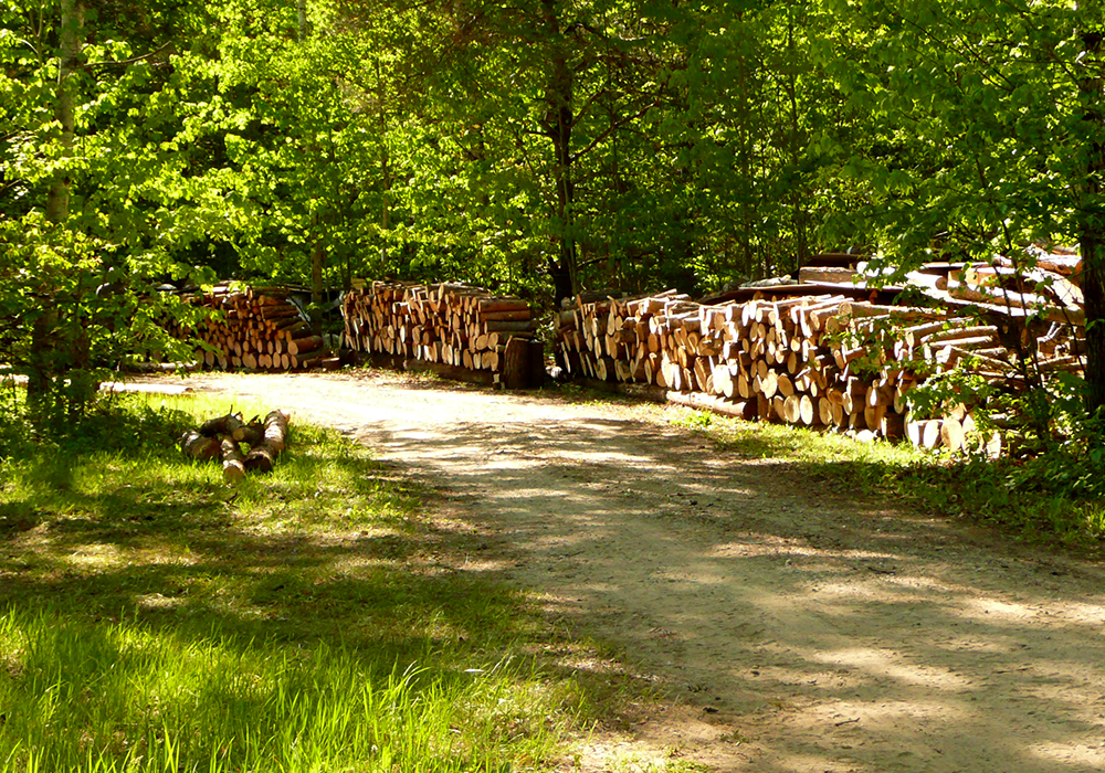 Wood logs stacked along a path