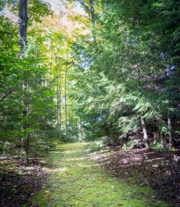 Forest path in the summer